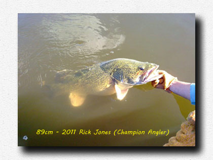 89cm Cod realeased by Champion angler 2011